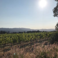 napa valley private wine tours